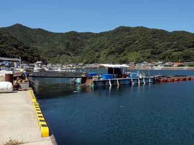 19奈留島の漁港.jpg