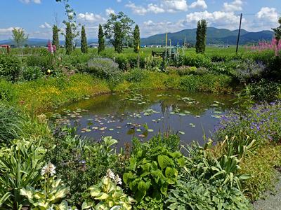20ノームの庭の池.jpg