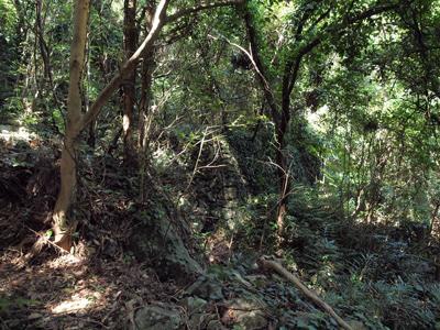 22奈留島自然遊歩道は蜘蛛の巣だらけ.jpg