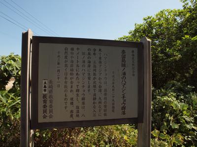 30奈留島ハマジンチョウ群落地説明板.jpg